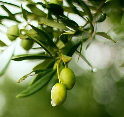 naturvit - olivenblattextrakt