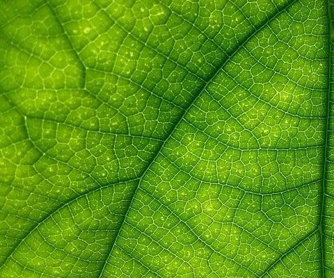 naturvit - grün