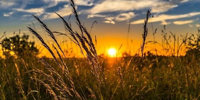 naturvit -gräser